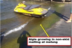 Metung Before and After